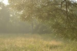 SG nature photo (1024x683)